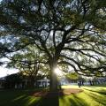 Masters photos A-Z oak tree clubhouse