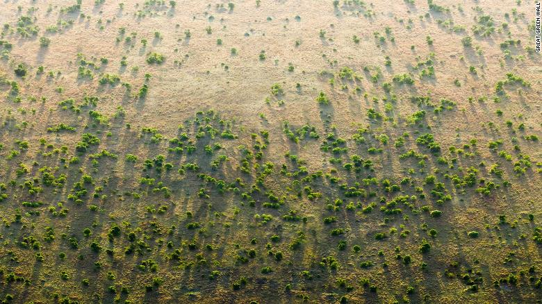 Africa's Great Green Wall aims to slow down desertification.