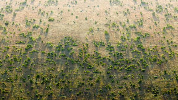 """Africa's """"Great Green Wall"""" aims to slow down desertification."""