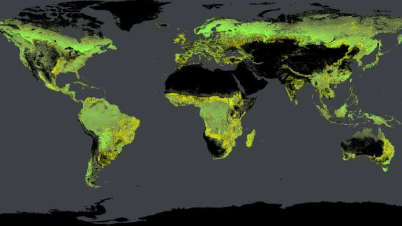 Global tree density, calculated by Crowther