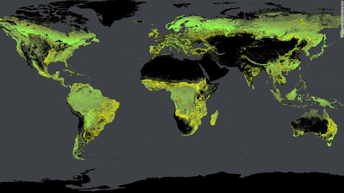 Global tree density, calculated by Crowther's team. Existing forests are shown in green, potential forests are yellow.