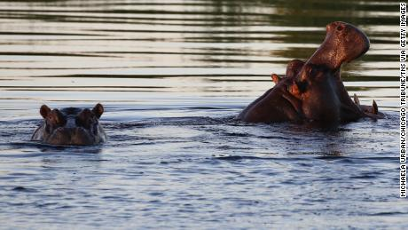 At least 28 hippos found dead in Ethiopia's national park