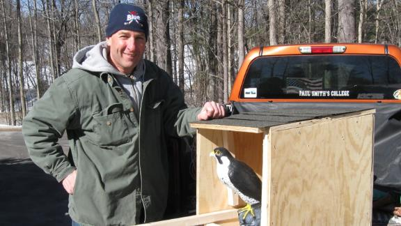 Vallieres also builds nesting boxes for falcons. Today he has a pair of kestrels nesting in his yard in Concord, New Hampshire.