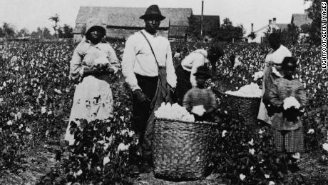African American men, women and children pick cotton in a cotton field and place it in straw bushel baskets, circa 1890.