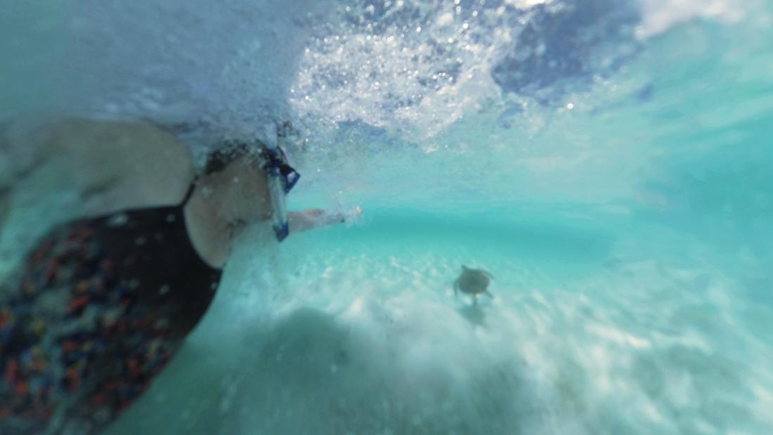 Swimming with sea turtles in the Bahamas