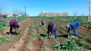 Syrian women in Jinwar rely on each other for farming and planting their own food.