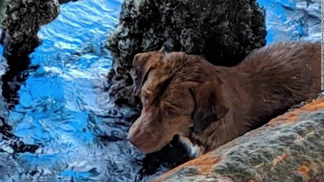 Dog survived 135 miles at sea