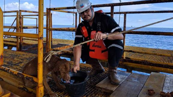 Workers threw a rope around the dog to rescue it from the sea.