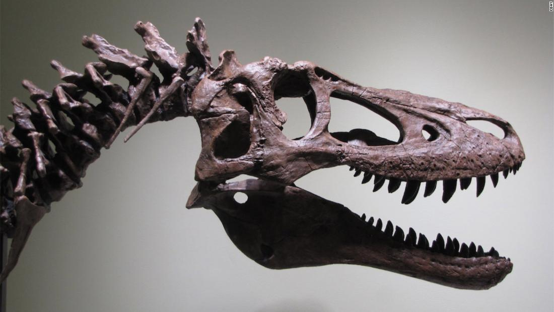 EBay listing of rare baby Tyrannosaurus rex angers scientists