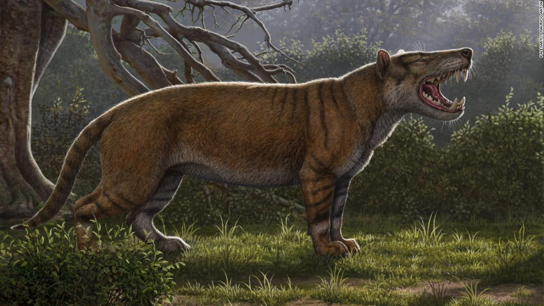 Researchers identify largest carnivorous mammals ever to live on land