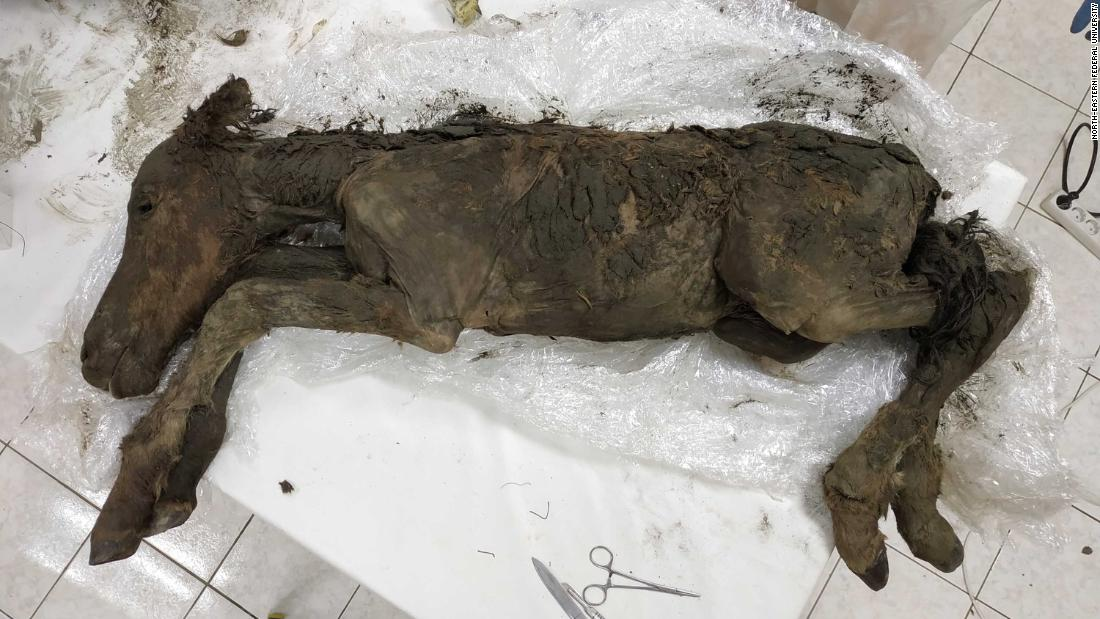 Liquid blood and urine found inside 42,000-year-old foal