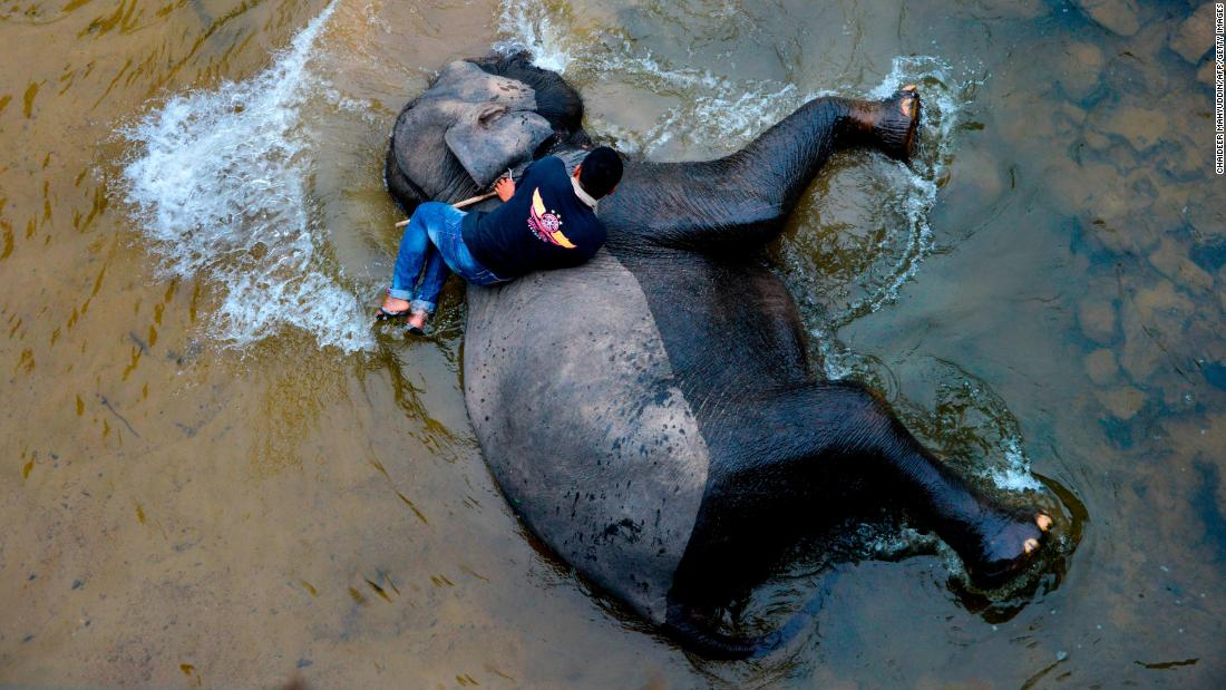 An Indonesian mahout, an elephant trainer, bathes a Sumatran elephant in a river on Monday, April 15.