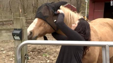 Loree Osowski's horse is being treated by a veterinarian