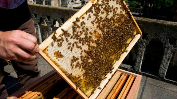 PARIS, FRANCE - AUGUST 1ST: Urban agriculture on the roofs of Paris on August 1st, 2016. the beekeeper Nicolas Geant  settled three hives on the roof of the sacristy of Notre-Dame, he produces 400 jars of honey distributed to the volunteers of the cathedral.(Photo by Virginie Clavieres/Paris Match via Getty Images)