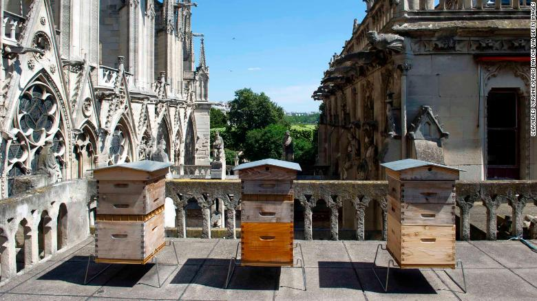 The beekeeper Nicolas Geant settled these three hives on the roof of the sacristy of Notre Dame