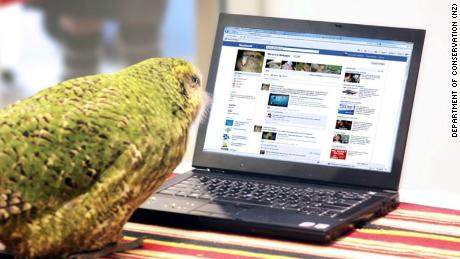 Sirocco checks his Facebook page in 2011.