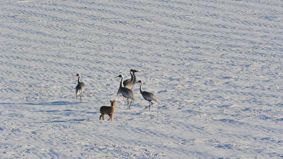 <strong>Filled with animals </strong>Migratory birds such as red-crowned cranes as well as water deer and mountain goats are some of the animals that call the DMZ home.