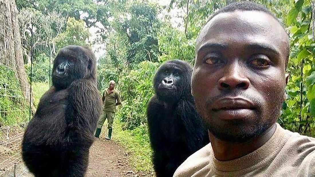 Gorillas strike a pose in selfie with ranger