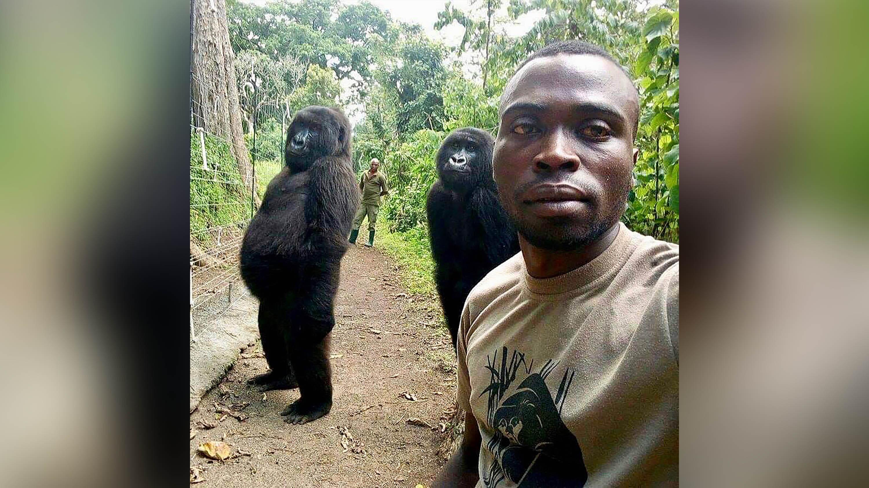 Park worker captures gorillas' sassy pose in selfie