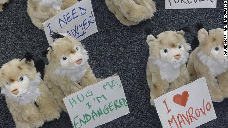The campaign displayed fluffy lynxes outside the EBRD annual meeting, Warsaw, 2014.