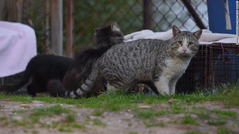 A feral cat in a neighborhood in Washington, DC on April 4, 2014.