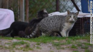 The case against cats: Why Australia has declared war on