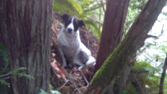 Daisy's barks led rescuers to the body of his owner, who was missing.