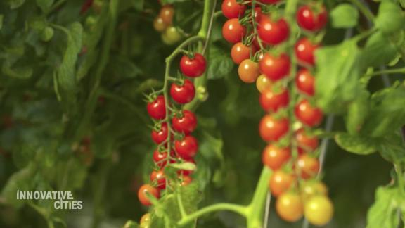 abu dhabi pure harvest innovative cities vision _00000730.jpg