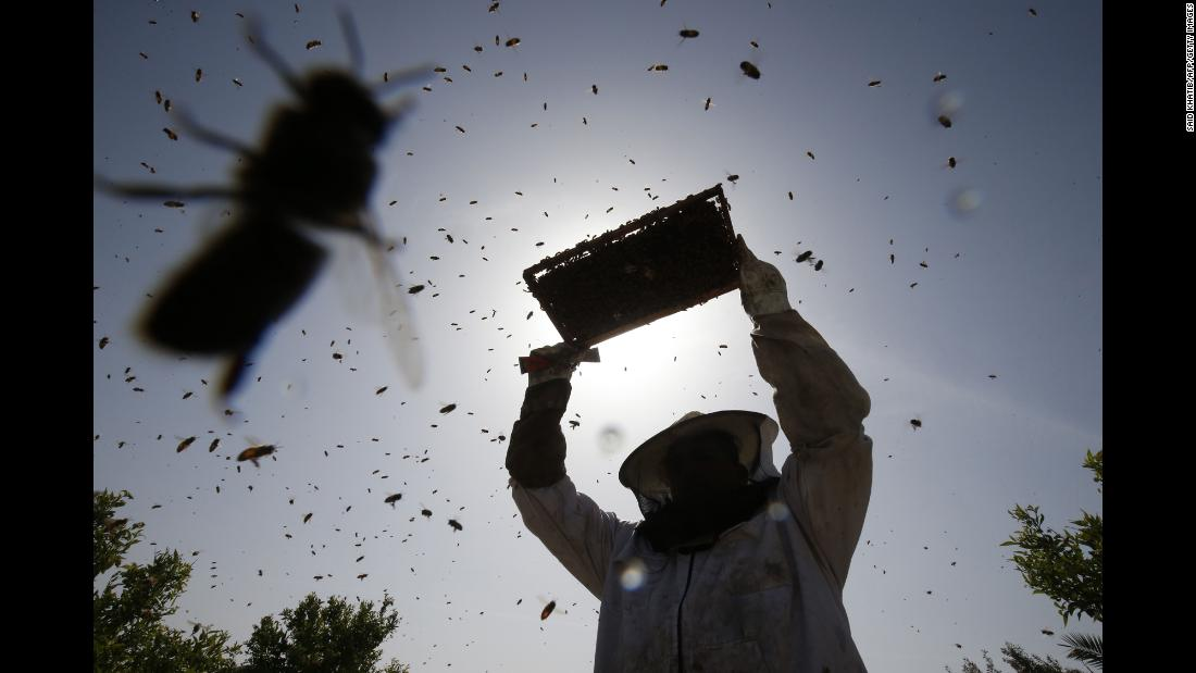 A worker collects honeybee combs at an apiary in Rafah, Gaza, on Friday, April 26.