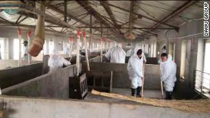 China's African swine fever epidemic could raise global meat