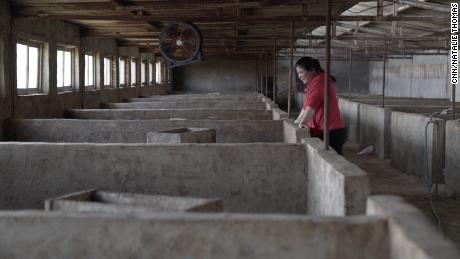 Pig farmer Zhang Haixia breathes in an empty pen after losing all his influenza flu epidemic in early 2019.