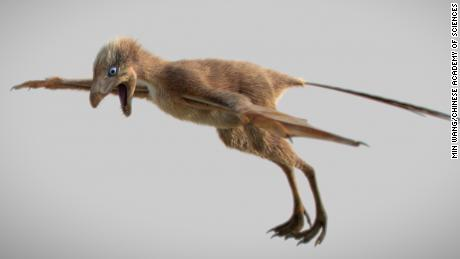 Gliding dinosaur with bat-like wings discovered in China