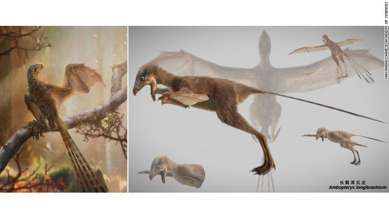 An artist's impression of the Ambopteryx.