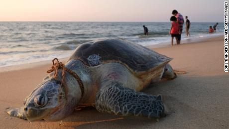 Plastic pollution is killing these animals