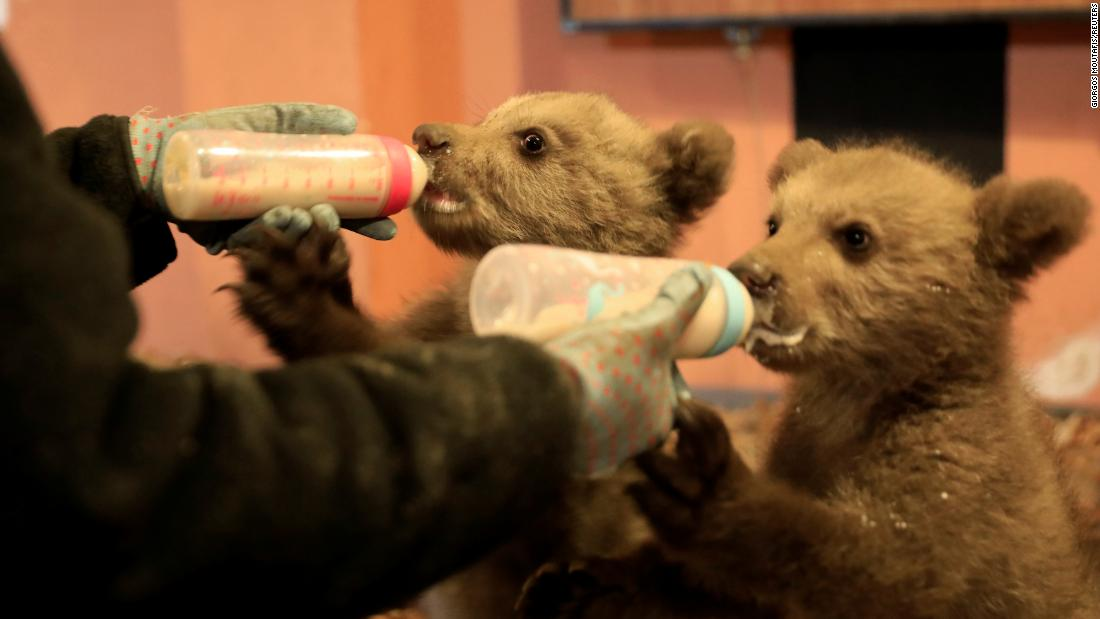 "Melina Avgerinou feeds <a href=""https://www.reuters.com/article/us-greece-bears/without-their-mother-bear-cubs-bradley-and-cooper-train-for-the-wild-idUSKCN1SC1UZ"" target=""_blank"">two orphaned cubs</a> at the Arcturos bear sanctuary in Nymfaio, Greece, on Saturday, May 4. The cubs are named Bradley and Cooper."