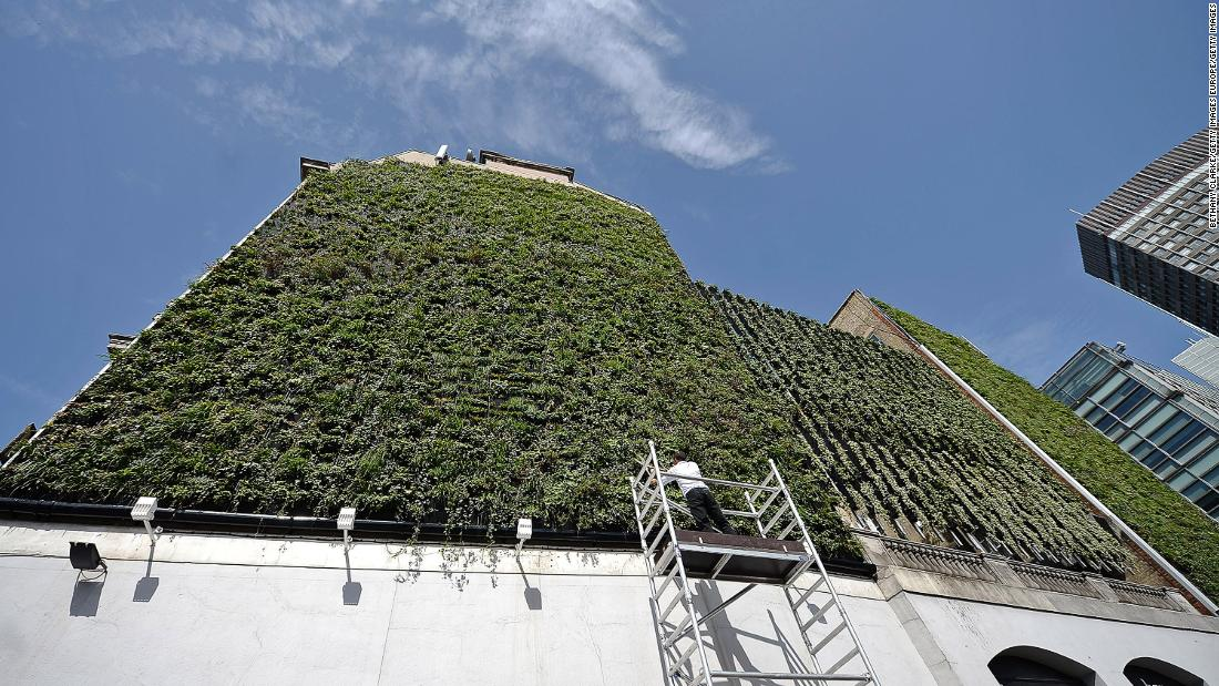 Green initiatives, such as living walls, have sprung up around London. This living wall, built in 2013, reduces flood risk by capturing rainwater in storage tanks. The wall consists of 10,000 plants and is packed with over 20 seasonal species.