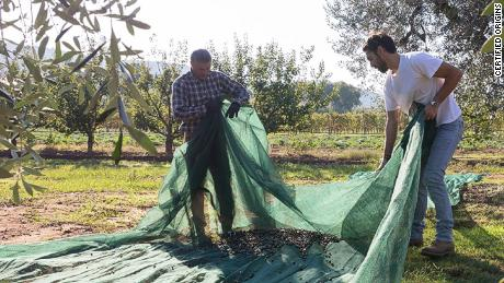 Bellucci olive oil prides itself on being able to prove its provenance to consumers through blockchain