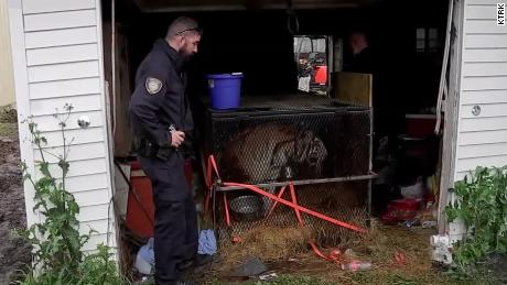 Officers found the tiger in a garage of a vacant house.