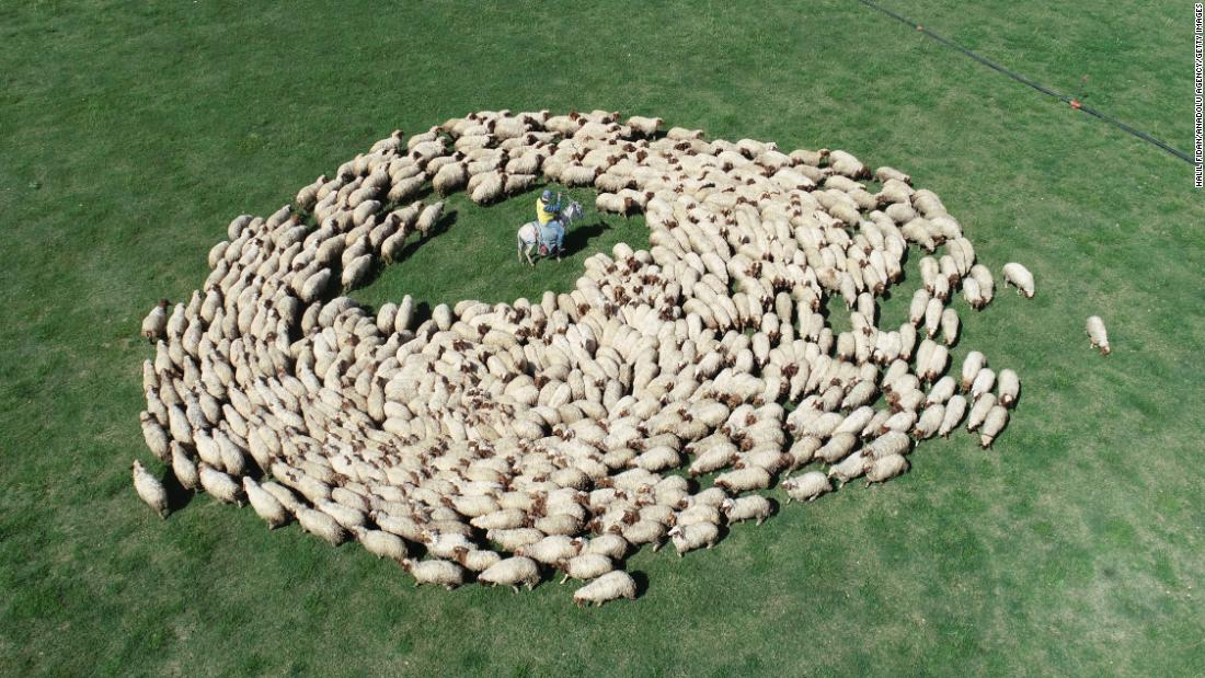 A flock of sheep is seen in Sanliurfa, Turkey, on Friday, May 10.