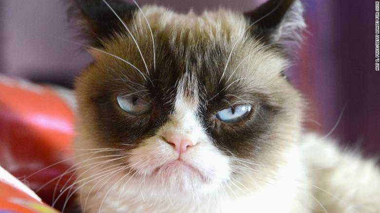 Internet sensation Grumpy Cat passes away - CNN Video