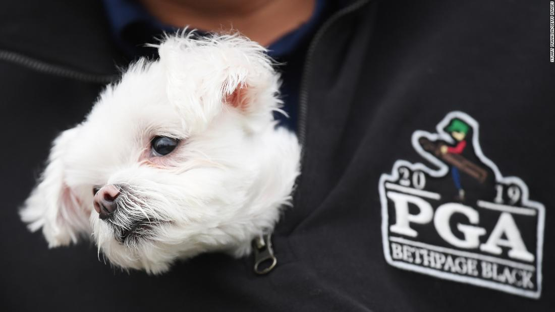 A dog pokes its head out of a fan's jacket during the final round of the PGA Championship on Sunday, May 19 in Farmingdale, New York.