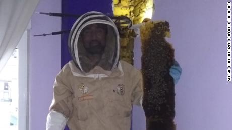 A beehive with 80,000 bees was removed from a bedroom wall in Grenada, Spain.