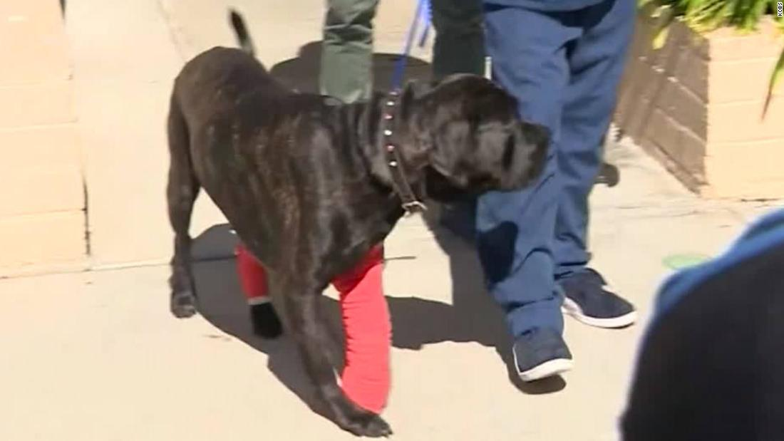 Here's how the dogs from the wild high-speed RV chase are doing