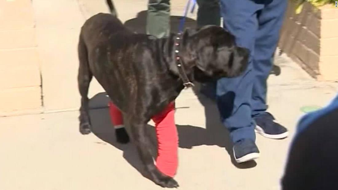 How are the dogs that survived the wild RV chase?