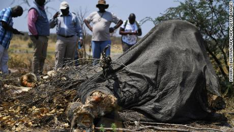 Media members gather around the dead elephant corpse in Chobe, September 19, 2018