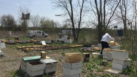 The business manages five beehives throughout the Chicago area, including one at O'Hare International Airport.