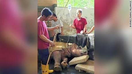 Malaysia's last male Sumatran rhino dies