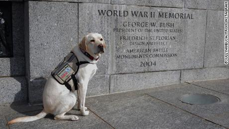Sully at the National World War II Memorial, dedicated in 2004 by President George W. Bush.