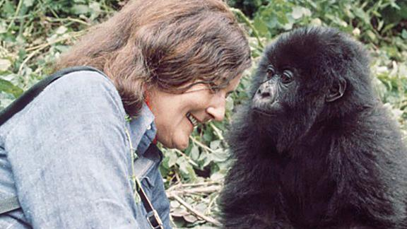 A young Poppy studies famed primatologist Dian Fossey in 1977.