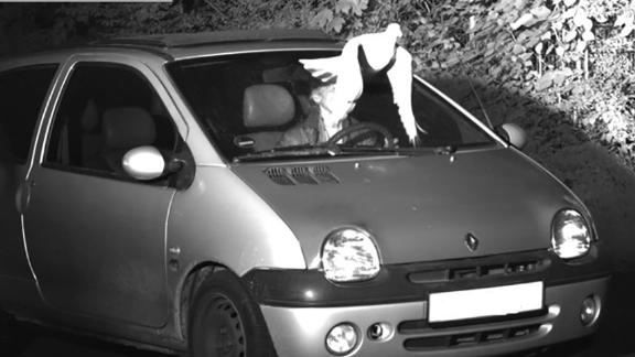 Divine intervention? Motorist escapes prosecution for speeding, thanks to a white dove.